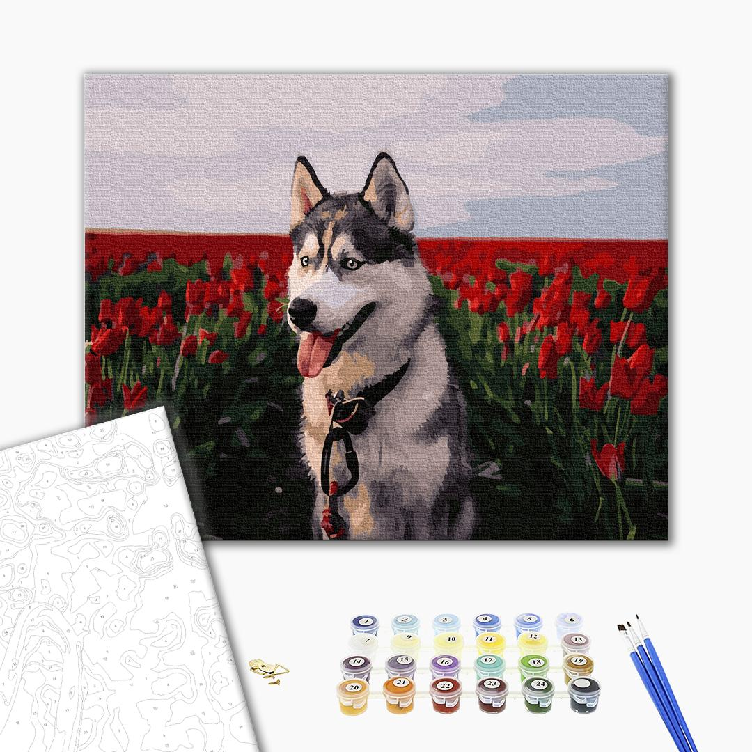 Картина по номерам Животные, птицы и рыбы - Хаскі в тюльпановому полі